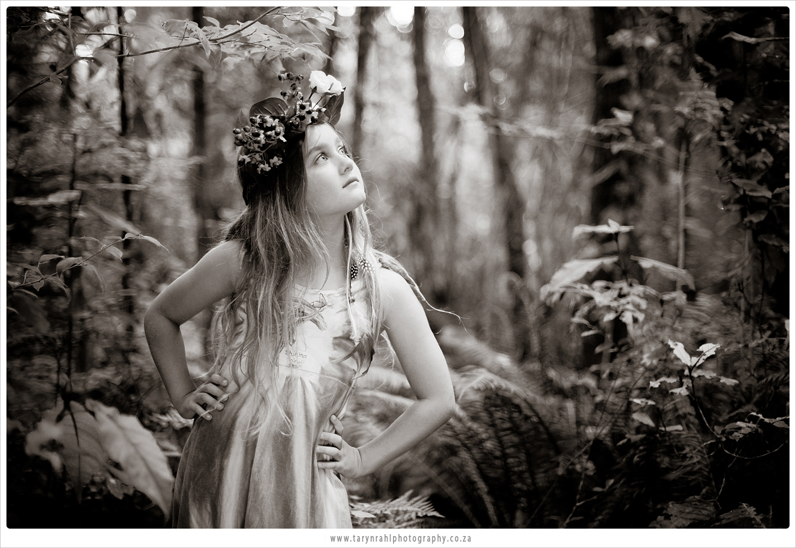 Knysna forrest Fairies