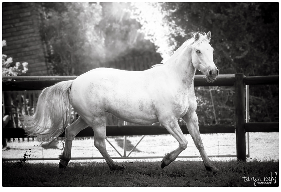 Horsin' around | A collection of recent equine photography